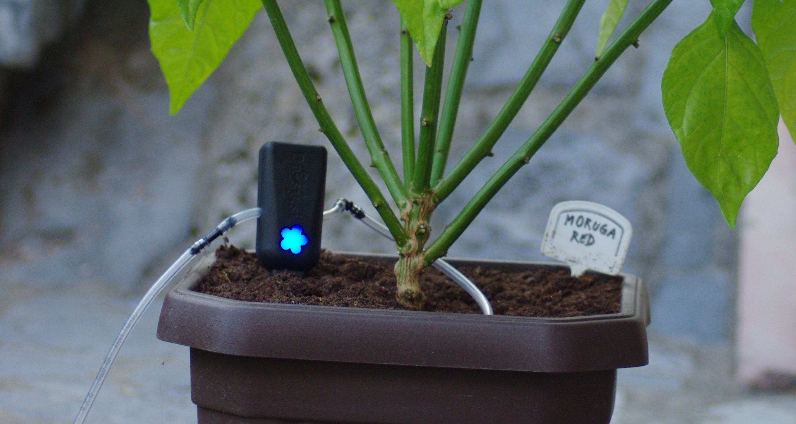indoor automatic watering system
